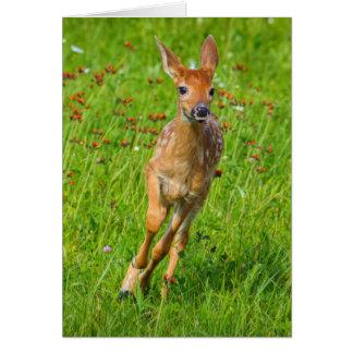 USA, Minnesota, Sandstone, Minnesota Wildlife 11 Card