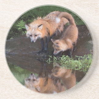 USA, Minnesota, Sandstone, Minnesota Wildlife 11 Coaster