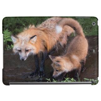 USA, Minnesota, Sandstone, Minnesota Wildlife 11 iPad Air Cover
