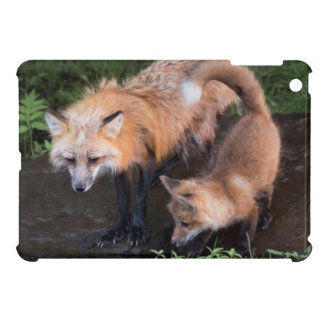 USA, Minnesota, Sandstone, Minnesota Wildlife 11 iPad Mini Cover
