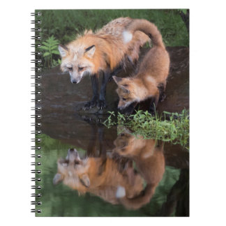 USA, Minnesota, Sandstone, Minnesota Wildlife 11 Notebook