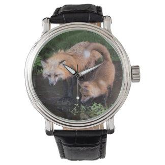 USA, Minnesota, Sandstone, Minnesota Wildlife 11 Watch
