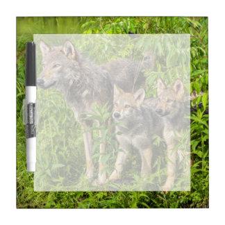 USA, Minnesota, Sandstone, Minnesota Wildlife 12 Dry Erase Board