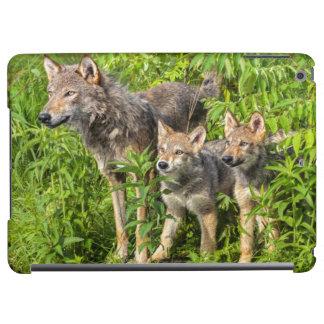 USA, Minnesota, Sandstone, Minnesota Wildlife 12 iPad Air Cover
