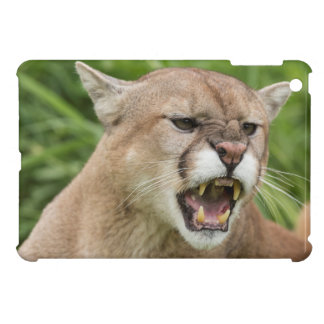USA, Minnesota, Sandstone, Minnesota Wildlife 12 iPad Mini Cases