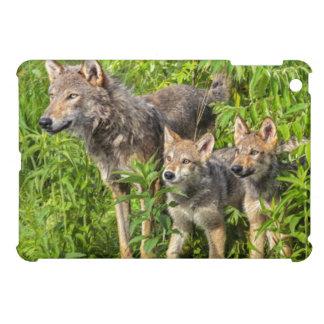 USA, Minnesota, Sandstone, Minnesota Wildlife 12 iPad Mini Cover