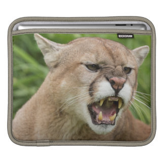 USA, Minnesota, Sandstone, Minnesota Wildlife 12 iPad Sleeve