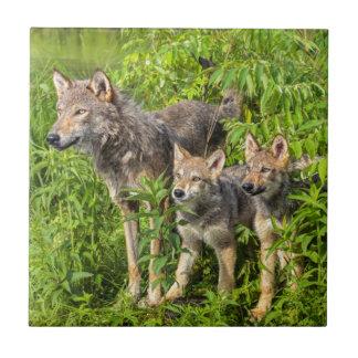 USA, Minnesota, Sandstone, Minnesota Wildlife 12 Tile