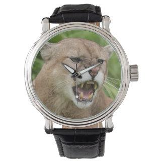 USA, Minnesota, Sandstone, Minnesota Wildlife 12 Watch