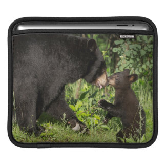 USA, Minnesota, Sandstone, Minnesota Wildlife 13 iPad Sleeve