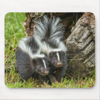 USA, Minnesota, Sandstone, Minnesota Wildlife 13 Mouse Pad
