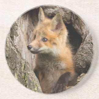 USA, Minnesota, Sandstone, Minnesota Wildlife 14 Coaster