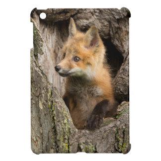 USA, Minnesota, Sandstone, Minnesota Wildlife 14 iPad Mini Cover