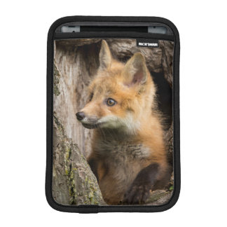 USA, Minnesota, Sandstone, Minnesota Wildlife 14 iPad Mini Sleeve