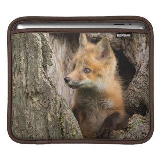 USA, Minnesota, Sandstone, Minnesota Wildlife 14 iPad Sleeve