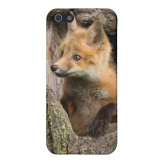 USA, Minnesota, Sandstone, Minnesota Wildlife 14 iPhone 5/5S Covers