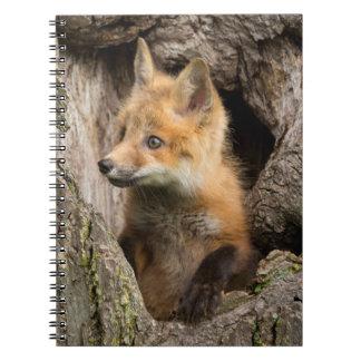 USA, Minnesota, Sandstone, Minnesota Wildlife 14 Note Books