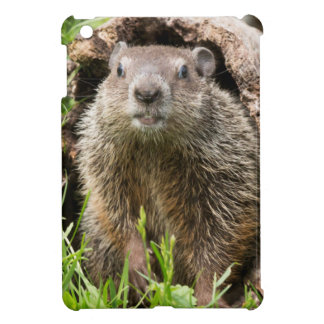 USA, Minnesota, Sandstone, Minnesota Wildlife 15 Case For The iPad Mini