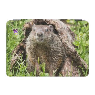 USA, Minnesota, Sandstone, Minnesota Wildlife 15 iPad Mini Cover
