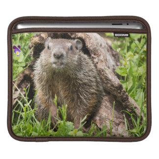 USA, Minnesota, Sandstone, Minnesota Wildlife 15 iPad Sleeve