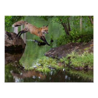 USA, Minnesota, Sandstone, Minnesota Wildlife 15 Poster