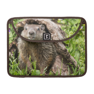 USA, Minnesota, Sandstone, Minnesota Wildlife 15 Sleeve For MacBook Pro