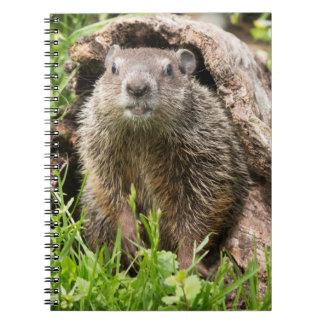 USA, Minnesota, Sandstone, Minnesota Wildlife 15 Spiral Note Books