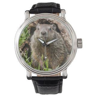 USA, Minnesota, Sandstone, Minnesota Wildlife 15 Watch