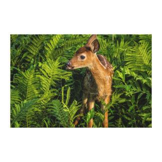 USA, Minnesota, Sandstone, Minnesota Wildlife 16 Canvas Print