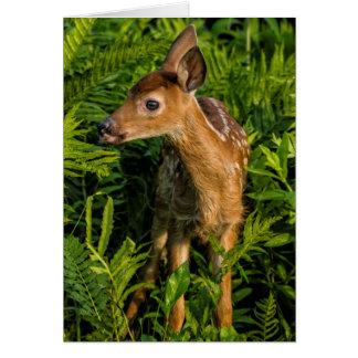 USA, Minnesota, Sandstone, Minnesota Wildlife 16 Card