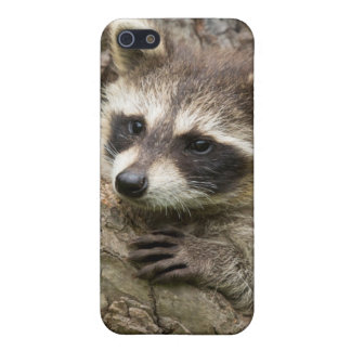 USA, Minnesota, Sandstone, Minnesota Wildlife 16 Case For iPhone 5/5S