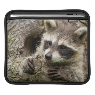 USA, Minnesota, Sandstone, Minnesota Wildlife 16 iPad Sleeve