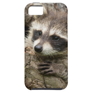 USA, Minnesota, Sandstone, Minnesota Wildlife 16 iPhone 5 Cases