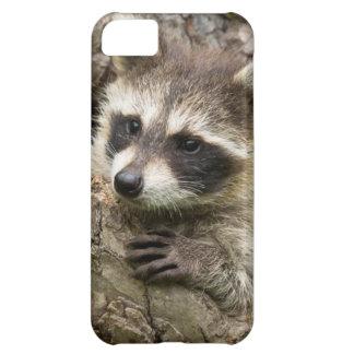 USA, Minnesota, Sandstone, Minnesota Wildlife 16 iPhone 5C Case