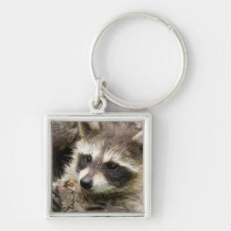 USA, Minnesota, Sandstone, Minnesota Wildlife 16 Key Ring