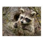 USA, Minnesota, Sandstone, Minnesota Wildlife 16 Postcard