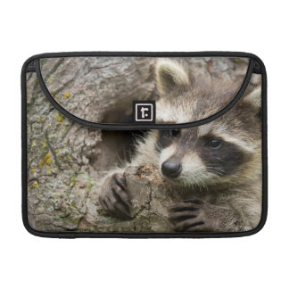 USA, Minnesota, Sandstone, Minnesota Wildlife 16 Sleeve For MacBooks