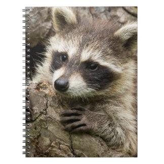 USA, Minnesota, Sandstone, Minnesota Wildlife 16 Spiral Note Book