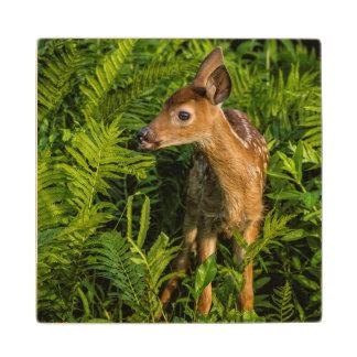 USA, Minnesota, Sandstone, Minnesota Wildlife 16 Wood Coaster