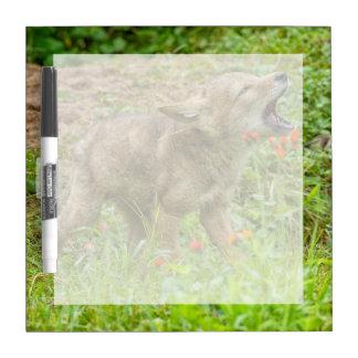 USA, Minnesota, Sandstone, Minnesota Wildlife 17 Dry Erase Board