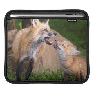 USA, Minnesota, Sandstone, Minnesota Wildlife 17 iPad Sleeve