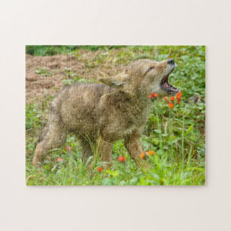 USA, Minnesota, Sandstone, Minnesota Wildlife 17 Jigsaw Puzzle