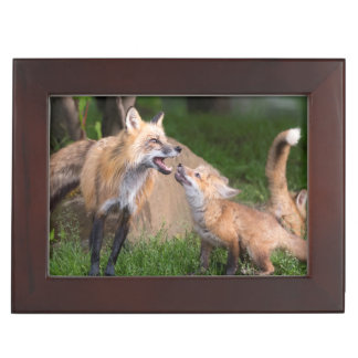 USA, Minnesota, Sandstone, Minnesota Wildlife 17 Keepsake Box