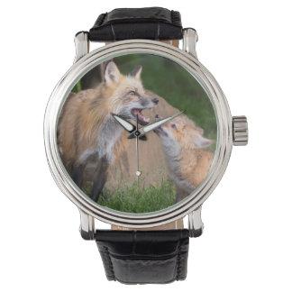 USA, Minnesota, Sandstone, Minnesota Wildlife 17 Watch