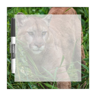 USA, Minnesota, Sandstone, Minnesota Wildlife 18 Dry Erase Board
