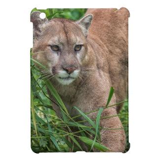 USA, Minnesota, Sandstone, Minnesota Wildlife 18 iPad Mini Cover