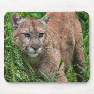 USA, Minnesota, Sandstone, Minnesota Wildlife 18 Mouse Mat