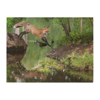 USA, Minnesota, Sandstone, Minnesota Wildlife 18 Wood Print