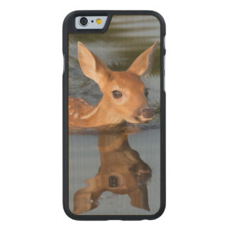 USA, Minnesota, Sandstone, Minnesota Wildlife 19 Carved Maple iPhone 6 Case