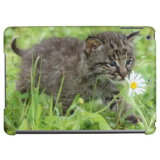 USA, Minnesota, Sandstone, Minnesota Wildlife 19 Cover For iPad Air